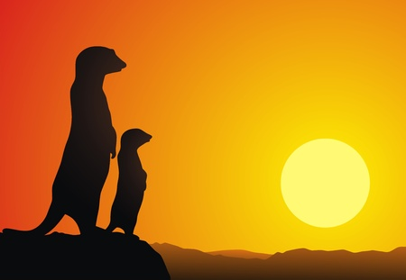 mongoose: Two suricatas stand on the brink of a rock against a sunset