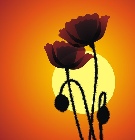 prickles: Two flowers of a poppy on the sleepyhead of a sunset Illustration