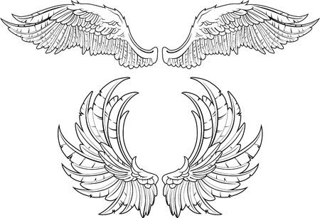 hand drawn wings: Two kinds of wings an accurate portrayal of feathers Illustration