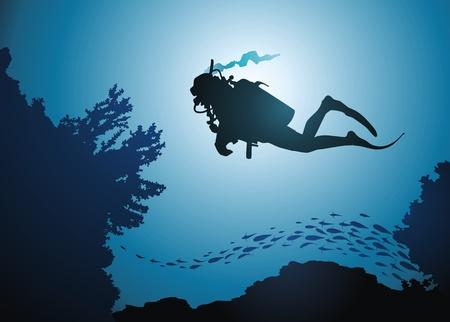 undersea: El buzo flota entre los corales y los peces