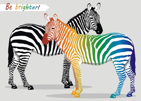 zebra: Zebra with multi-colored strips on a body