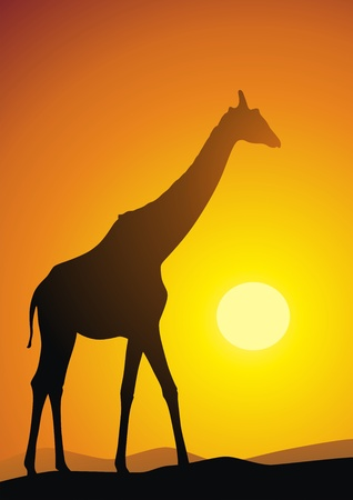The giraffe goes on sand against a sunset Stock Vector - 12944694