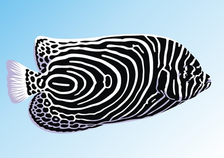 exotic fish: Fish with original black-and-white drawing on a body