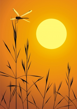 sedge: The dragonfly sits on a grass at sunset the sun