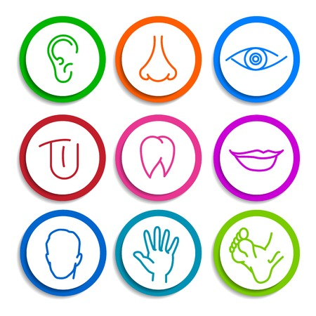 set of colored icons with flat parts of the human body ear nose eyes tongue teeth mouth lips head arm leg foot