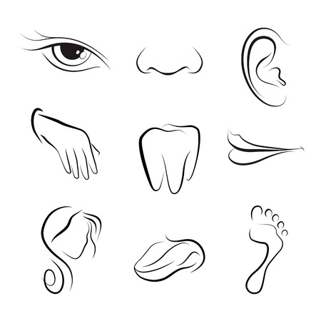 human eye: set icons with flat parts of the human body