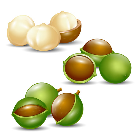 macadamia: macadamia nuts white background isolated natural organic