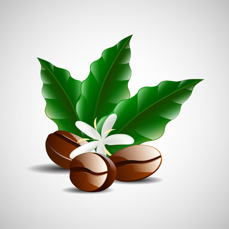 coffee leaf: vector single coffee bean with leaf isolated on white background
