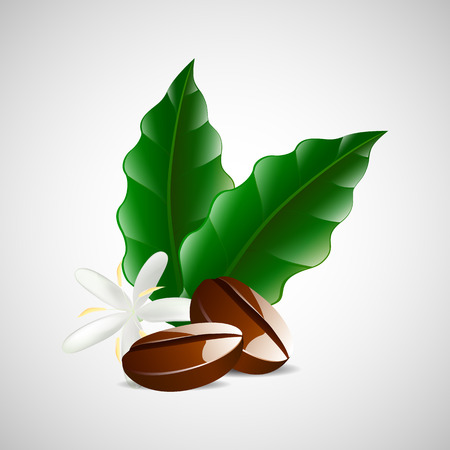processed grains: vector single coffee bean with leaf isolated on white background