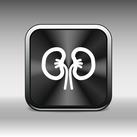 kidney icon isolated human two vein white medical.