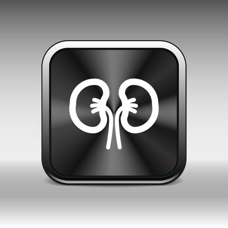 nephrology: kidney icon isolated human two vein white medical.