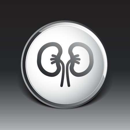 nephrology: kidney icon isolated human two vein white medical.
