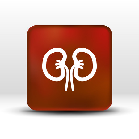 vein: kidney icon isolated human two vein white medical.