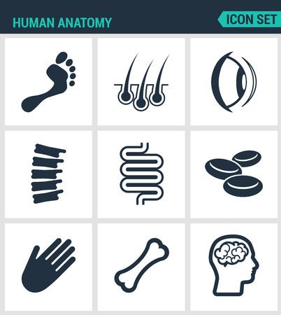 anatomy leg: Set of modern vector icons. Human anatomy leg, hair, eye, foot, Ridge, intestine, blood, hand, bone, brain. Black signs on a white background. Design isolated symbols and silhouettes.