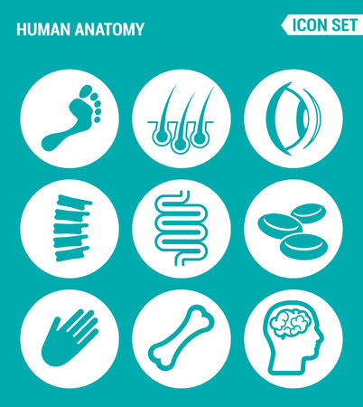 ridge: Vector set web icons. Human anatomy, leg, hair, eye, foot, Ridge, intestine, blood, hand, bone, brain. Design of signs, symbols on a turquoise background