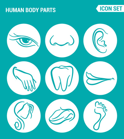 nostrils: Vector set web icons. Human body parts, eyes nose, ear, teeth, mouth, head, tongue, foot. Design of signs, symbols on a turquoise background Illustration