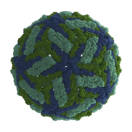 dengue: 3D rendering of a virus, the causative agent of dengue fever
