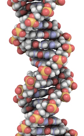 nanotech: DNA 3D structure. DNA is the main carrier of genetic information in all organisms. The DNA shown here is part of a human gene and is shown as a linear double helix.