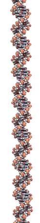DNA 3D-Struktur. DNA ist die wichtigste Trägerin der Erbinformation in allen Organismen. Die DNA abgebildet ist Teil eines menschlichen Gens und wird als eine lineare Doppelhelix gezeigt. Standard-Bild - 12857408