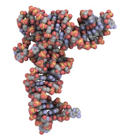 Structure of a transfer RNA (tRNA, IletRNA) molecule Stock Photo - 12988608