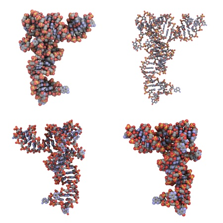 Structure of a transfer RNA (tRNA, IletRNA) molecule photo