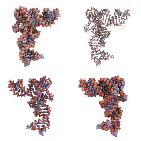 molekuul: Structure of a transfer RNA (tRNA, IletRNA) molecule