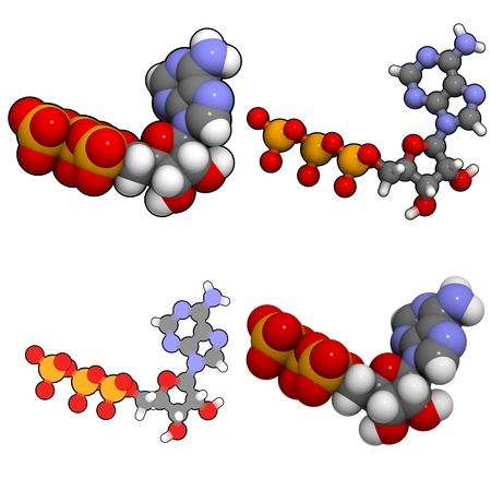 A molecule of adenosine triphosphate (ATP), the main energy transport molecule in most organisms.
