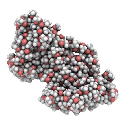 monomer: Estructura 3D de una mol�cula de PMMA, una alternativa de pl�stico transparente de cristal.