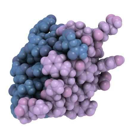 trzustka: Struktura chemiczna czÄ…steczki insuliny ludzkiej. Insulina jest stosowany w leczeniu cukrzycy typu 1. Zdjęcie Seryjne