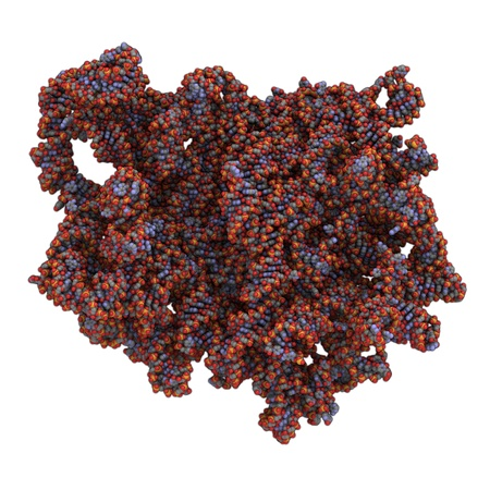 proteomics: Chemical structure of the ribosome of Bakers yeast (Saccharomyces cerevisiae).