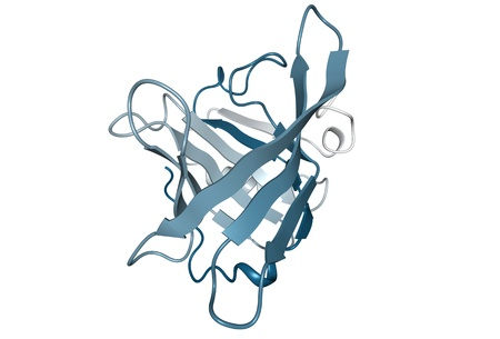 Chemical structure of bovine beta-lactoglobulin, the main whey protein in cow and sheeps milk. photo