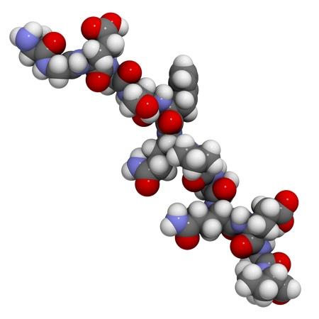 intolerancia: gliadina desamidada (sin gluten) p�ptido fragmento, uno de los principales alergenos responsables de la enfermedad cel�aca. Foto de archivo