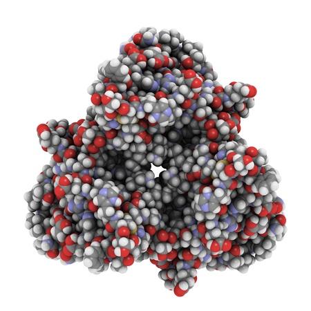 Chemische Struktur von Leptin, ein Hormon, das von Fettzellen sezerniert, die den Appetit reduziert und spielt eine Rolle bei der Entwicklung von Adipositas. Standard-Bild - 13696212