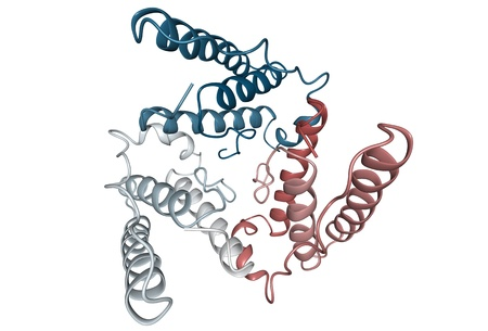 Chemische Struktur von Leptin, ein Hormon, das von Fettzellen sezerniert, die den Appetit reduziert und spielt eine Rolle bei der Entwicklung von Adipositas. Standard-Bild - 13696157