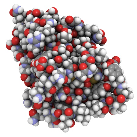 dromedaries: Chemical structure of a nanobody, a small antibody found in camels, dromedaries and llamas.