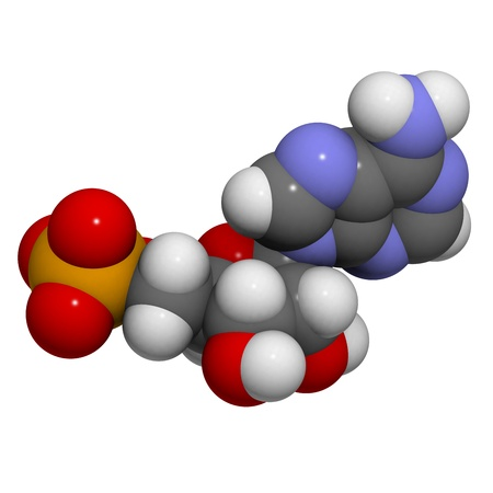 nucleoside: Chemical structure of a molecule of Adenosine monophosphate (AMP). This is one of the four building blocks of RNA.