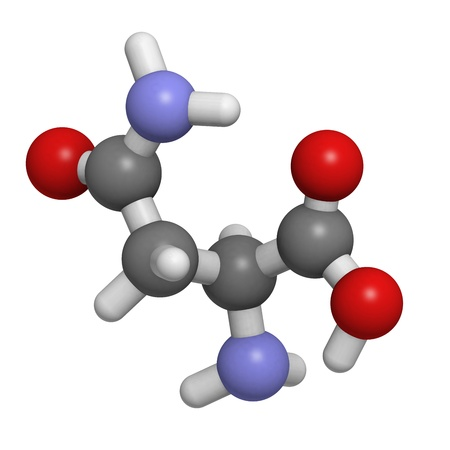 molekuul: Chemical structure of a molecule of L-Asparagine (Asn, N). Asparagine is a nonessential amino acid. It is abundant in asparagus.