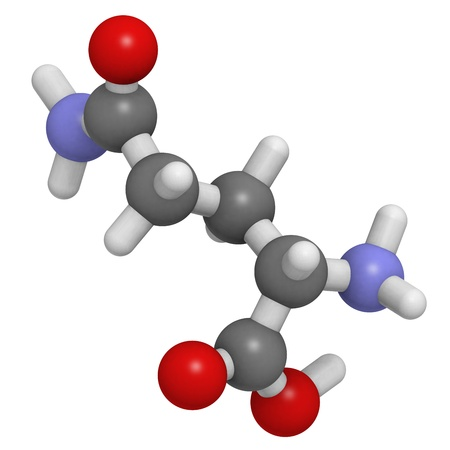 amino: Chemical structure of a molecule of L-Glutamine (Gln, Q). This non-essential amino acid can act as a cellular energy source, as a nitrogen donor, as a carbon donor and as an ammonia transport molecule.