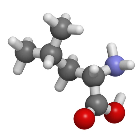 stimulate: Chemical structure of a molecule of L-leucine (Leu, L). Leucine is an essential amino acid. Leucine is believed to stimulate muscle protein synthesis, and for this reason is often used as a dietary supplement.