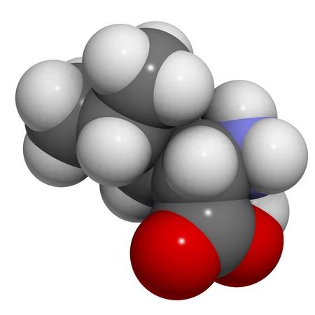 leu: Struttura chimica di una molecola di L-leucina (Leu, L). Leucina � un amminoacido essenziale. Leucina si crede per stimolare la sintesi proteica muscolare, e per questo motivo viene spesso utilizzato come integratore alimentare. Archivio Fotografico