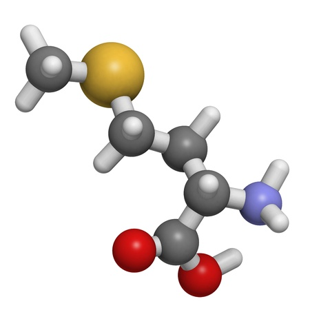 molekuul: Chemical structure of a molecule of L-Methionine (Met, M). Methionine is an essential amino acid. It is nonpolar and contains a thioether (sulfur ether) function. At least in some animal models, dietary methionine restriction can increase lifespan.