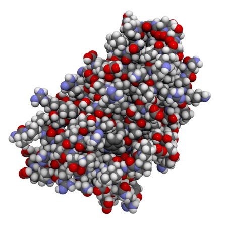 enhancing: Chemical structure of Human Erythropoietin (EPO). This hormone controls the production of red blood cells and is frequently used as a performance enhancing drug (sports doping).