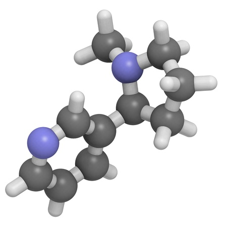 addictive: Chemical structure of a molecule of nicotine. Nicotine is the main addictive component of tobacco.