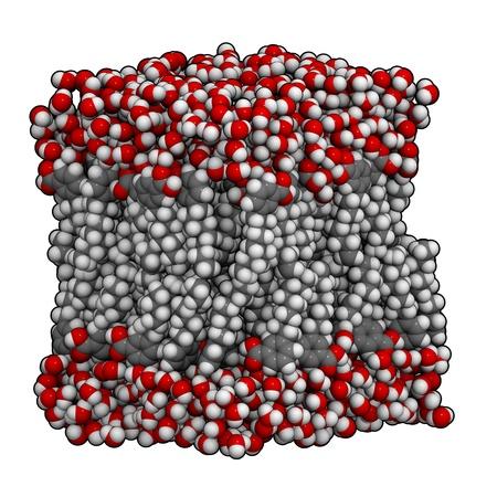 lipid: Lipid bilayer membrane model, chemical structure. Stock Photo