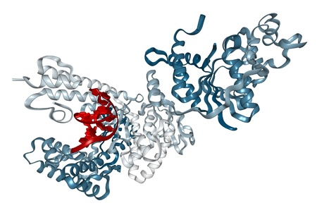 chain reaction: Chemical structure of Taq polymerase, the key enzyme used in the polymerase chain reaction (PCR).
