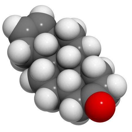 hormone  male: Chemical structure of a molecule of androstenone, a mammalian pheromone.