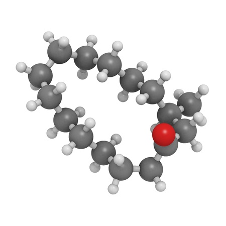 musk: Chemical structure of a molecule of muscone, the main component of musk odor.