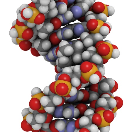 thymine: Chemical structure of DNA damaged by light. UV radiation has caused two thymine residues to form a photodimer.  Stock Photo