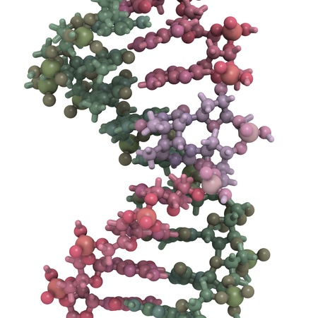 thymine: Chemical structure of DNA damaged by light. UV radiation has caused two thymine residues to form a photodimer. Such DNA damage can give rise to mutations and eventually cancer, especially melanoma (skin cancer).  Stock Photo
