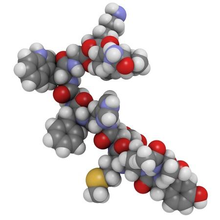 stimulating: Chemical structure of a molecule of melanotropin (melanocyte stimulating hormone, MSH).
